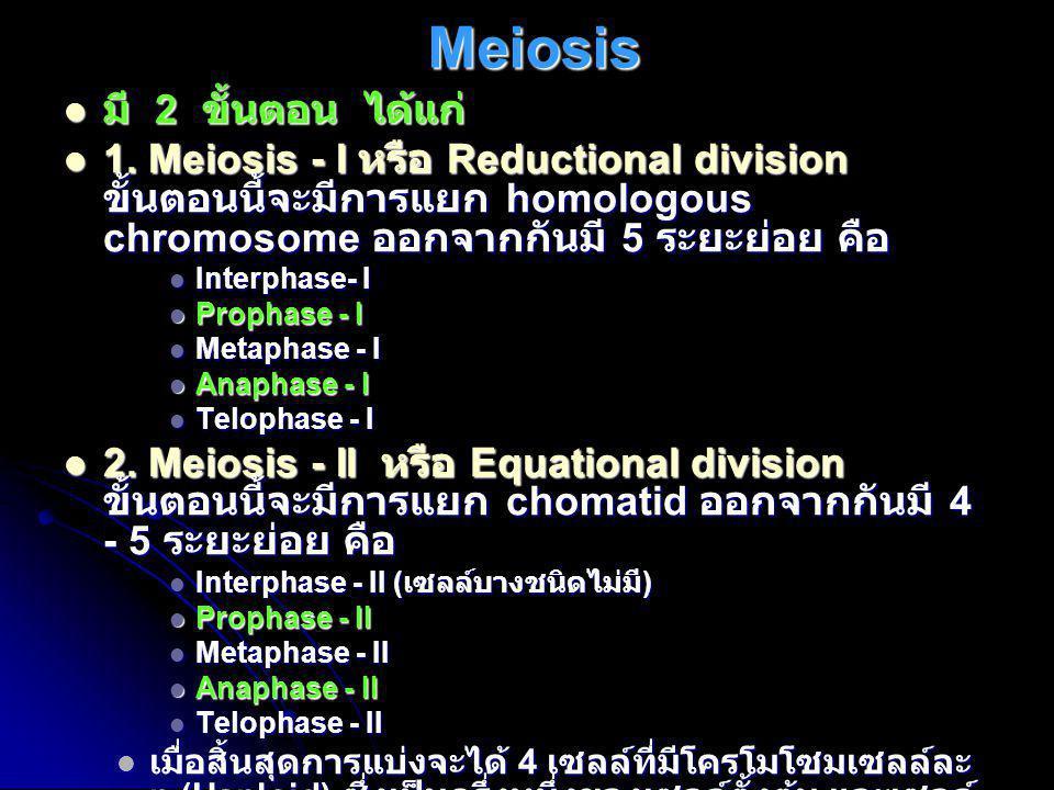 Meiosis  มี 2 ขั้นตอน ได้แก่  1. Meiosis - I หรือ Reductional division ขั้นตอนนี้จะมีการแยก homologous chromosome ออกจากกันมี 5 ระยะย่อย คือ  Inter