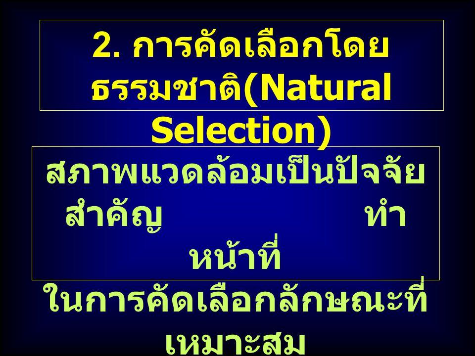 2. การคัดเลือกโดย ธรรมชาติ (Natural Selection) สภาพแวดล้อมเป็นปัจจัย สำคัญ ทำ หน้าที่ ในการคัดเลือกลักษณะที่ เหมาะสม