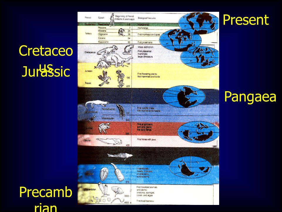 Precamb rian Present Jurassic Cretaceo us Pangaea