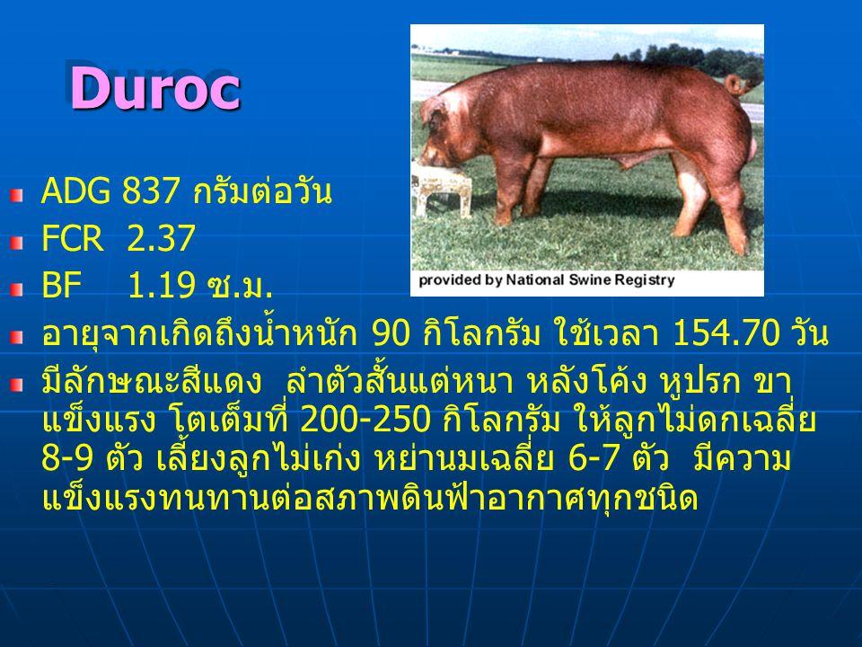 DurocDuroc ADG 837 กรัมต่อวัน FCR 2.37 BF 1.19 ซ.ม. อายุจากเกิดถึงน้ำหนัก 90 กิโลกรัม ใช้เวลา 154.70 วัน มีลักษณะสีแดง ลำตัวสั้นแต่หนา หลังโค้ง หูปรก
