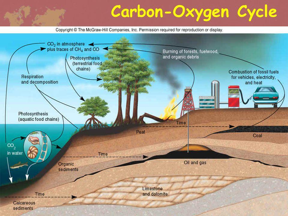 •Carbon จากธรรมชาติมีการทับถม และแปรเป็น ถ่านหินและ ปิโตรเลียม ซึ่งเมื่อเผาไหม้แล้วจะ ได้ CO 2 คืนสู่อากาศ • การรักษาสมดุลของ CO 2 เกี่ยวข้องกับการอยู่ในรูป สารละลาย carbon ในมหาสมุทร เช่น HCO 3 - / CO 3 -2 • ความเข้มข้นของ CO 2 ของ บรรยากาศต่ำ คงที่เพราะมีทะเล เป็นแหล่งเก็บที่สำคัญ Carbon-Oxygen Cycle