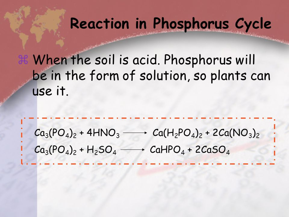  Phosphorus is the component of ATP, cell membrane and genetic material of the livings in form of phosphate ion (PO 4 3- ).  Phosphorus is always co