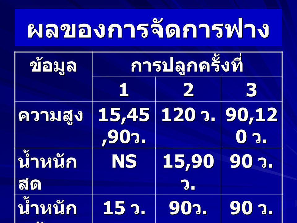 ผลของการจัดการฟาง ข้อมูลการปลูกครั้งที่ 123 ความสูง 15,45,90 ว. 120 ว. 90,12 0 ว. น้ำหนัก สด NS 15,90 ว. 90 ว. น้ำหนัก แห้ง 15 ว. 90 ว. ผลผลิตNSNSNS