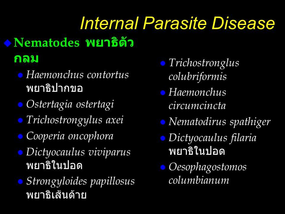 Internal Parasite Disease  Nematodes พยาธิตัว กลม  Haemonchus contortus พยาธิปากขอ l Ostertagia ostertagi l Trichostrongylus axei l Cooperia oncopho