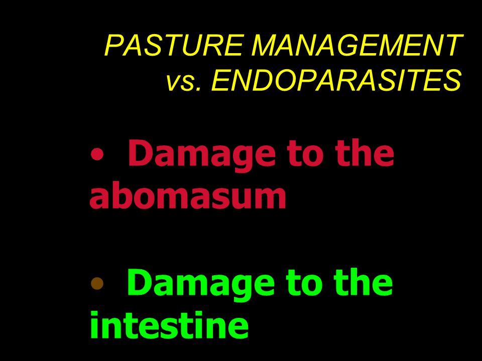 PASTURE MANAGEMENT vs. ENDOPARASITES • Damage to the abomasum • Damage to the intestine