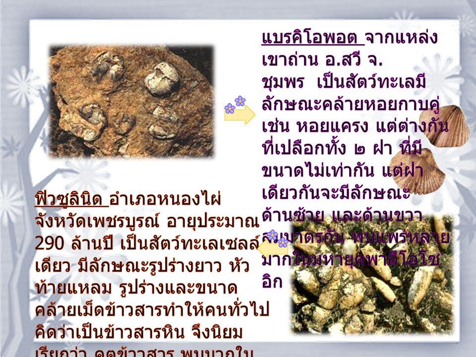 จะเห็นว่าแหล่งซากไดโนเสาร์ของ ประเทศไทยส่วนมากจะ อยู่ในภาคตะวันออกเฉียงเหนือ ในชั้นหินทราย หินทราย แป้ง ซึ่งเป็นหินอยู่ในยุคไทรแอสสิก ตอนปลายถึงยุคครีเต เชียสตอนกลาง หรือตั้งแต่ 200 100 ล้านปีที่ผ่านมา