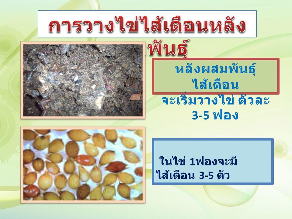 ในไข่ 1 ฟองจะมี ไส้เดือน 3-5 ตัว หลังผสมพันธุ์ ไส้เดือน จะเริ่มวางไข่ ตัวละ 3-5 ฟอง