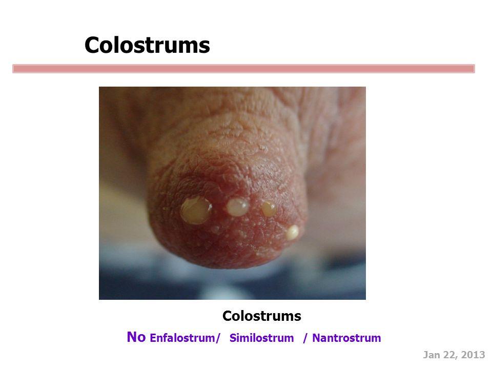 Jan 22, 2013 Colostrums No Enfalostrum/ Similostrum / Nantrostrum Colostrums