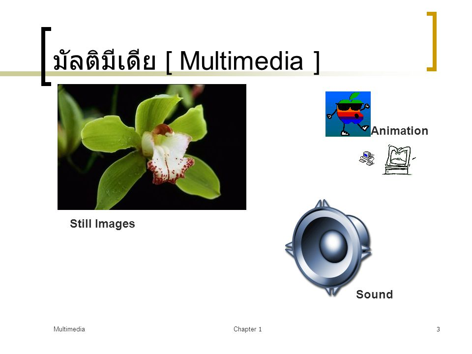 MultimediaChapter 13 มัลติมีเดีย [ Multimedia ] Still Images Sound Animation