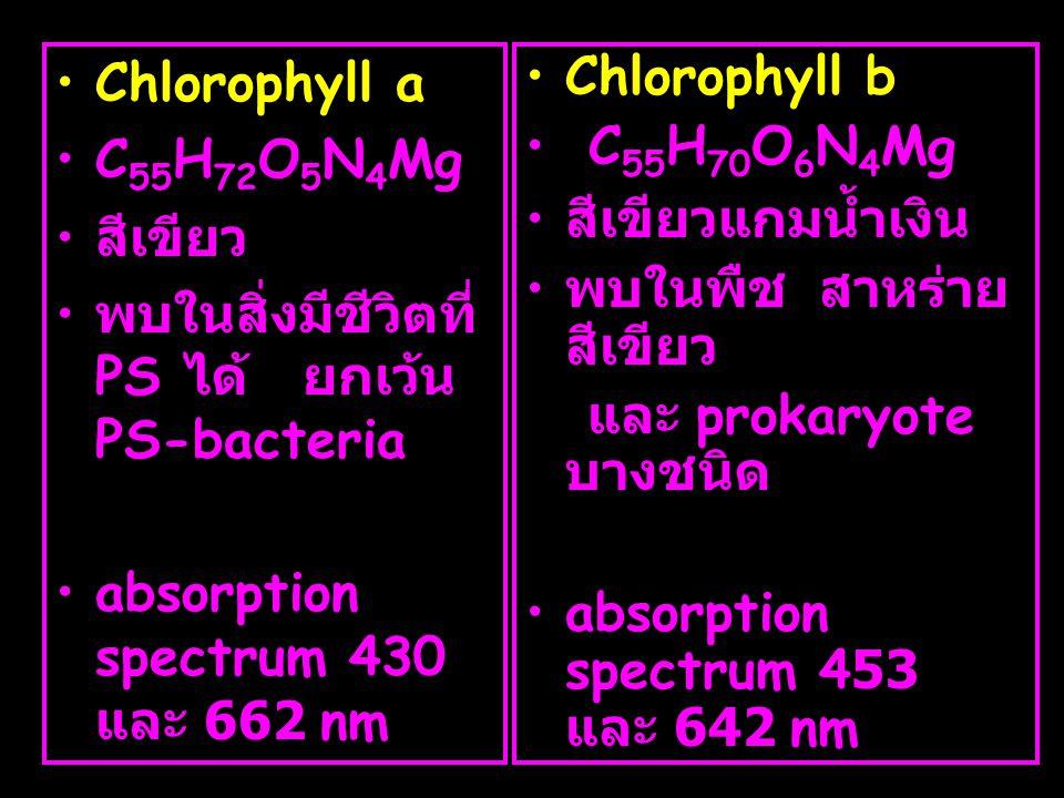 •Chlorophyll a •C 55 H 72 O 5 N 4 Mg • สีเขียว • พบในสิ่งมีชีวิตที่ PS ได้ ยกเว้น PS-bacteria •absorption spectrum 430 และ 662 nm •Chlorophyll b • C 5