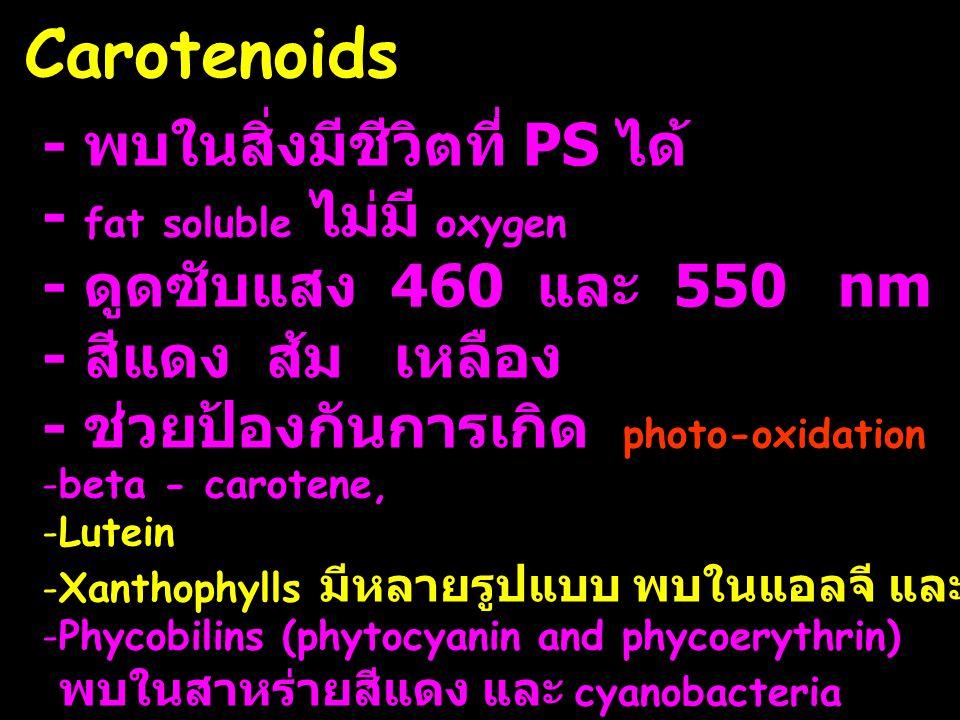 Carotenoids - พบในสิ่งมีชีวิตที่ PS ได้ - fat soluble ไม่มี oxygen - ดูดซับแสง 460 และ 550 nm - สีแดง ส้ม เหลือง - ช่วยป้องกันการเกิด photo-oxidation