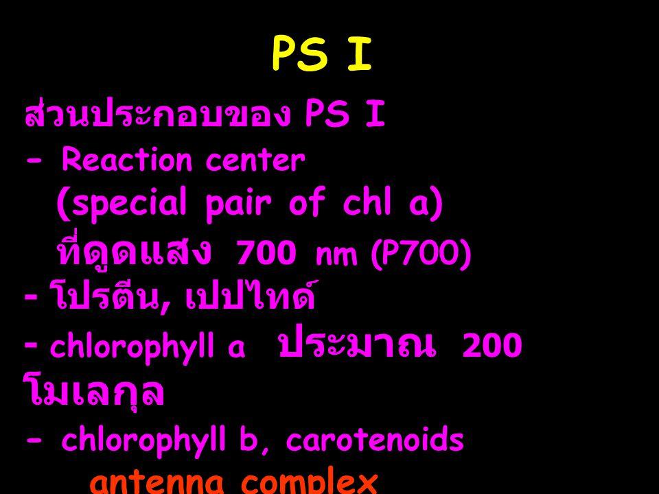PS I ส่วนประกอบของ PS I - Reaction center (special pair of chl a) ที่ ดูดแสง 700 nm (P700) - โปรตีน, เปปไทด์ - chlorophyll a ประมาณ 200 โมเลกุล - chlo