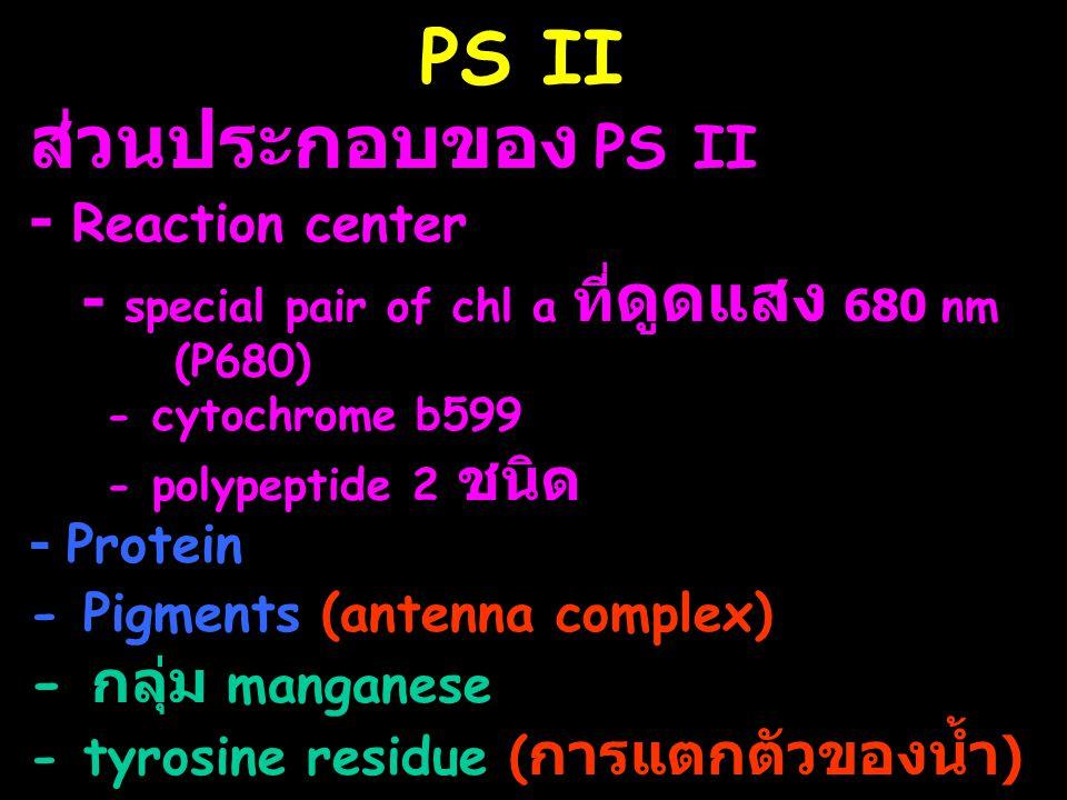 PS II ส่วนประกอบของ PS II - Reaction center - special pair of chl a ที่ ดูดแสง 680 nm (P680) - cytochrome b599 - polypeptide 2 ชนิด - Protein - Pigmen