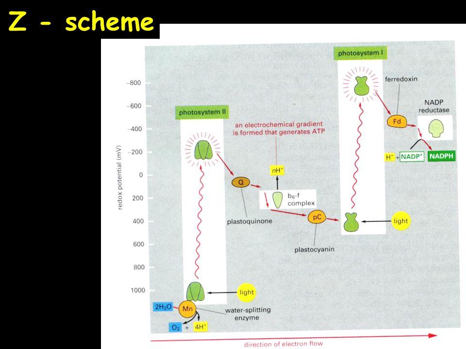 Z - scheme