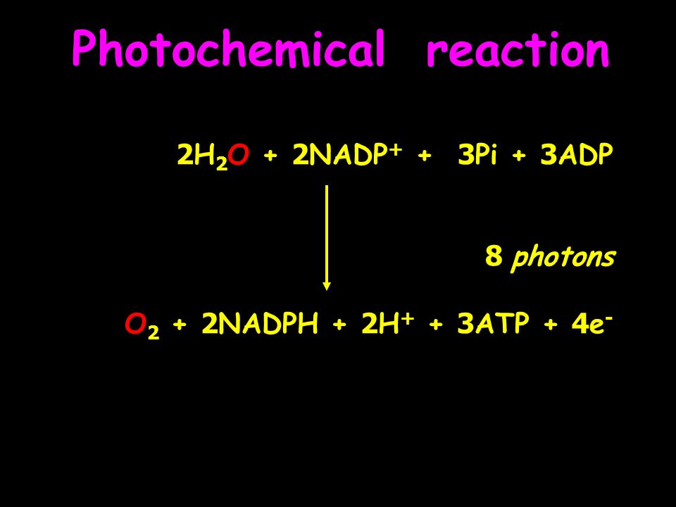 Photochemical reaction 2H 2 O + 2NADP + + 3Pi + 3ADP 8 photons O 2 + 2NADPH + 2H + + 3ATP + 4e -