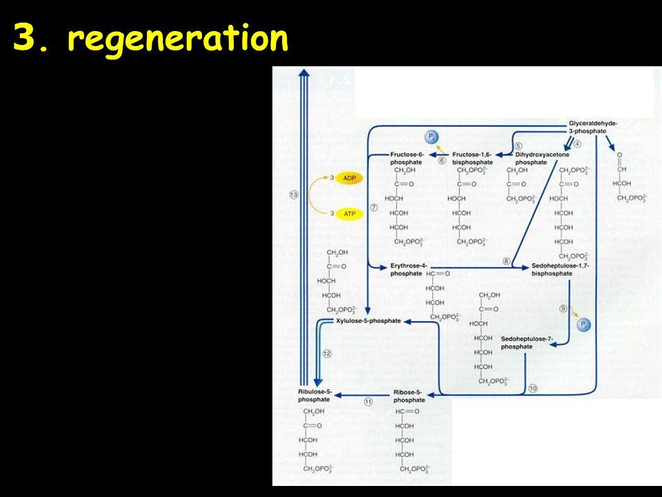 3. regeneration