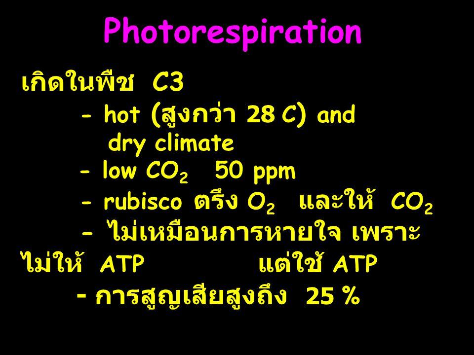 Photorespiration เกิดในพืช C3 - hot ( สูงกว่า 28 C ) and dry climate - low CO 2 50 ppm - rubisco ตรึง O 2 และให้ CO 2 - ไม่เหมือนการหายใจ เพราะ ไม่ให้