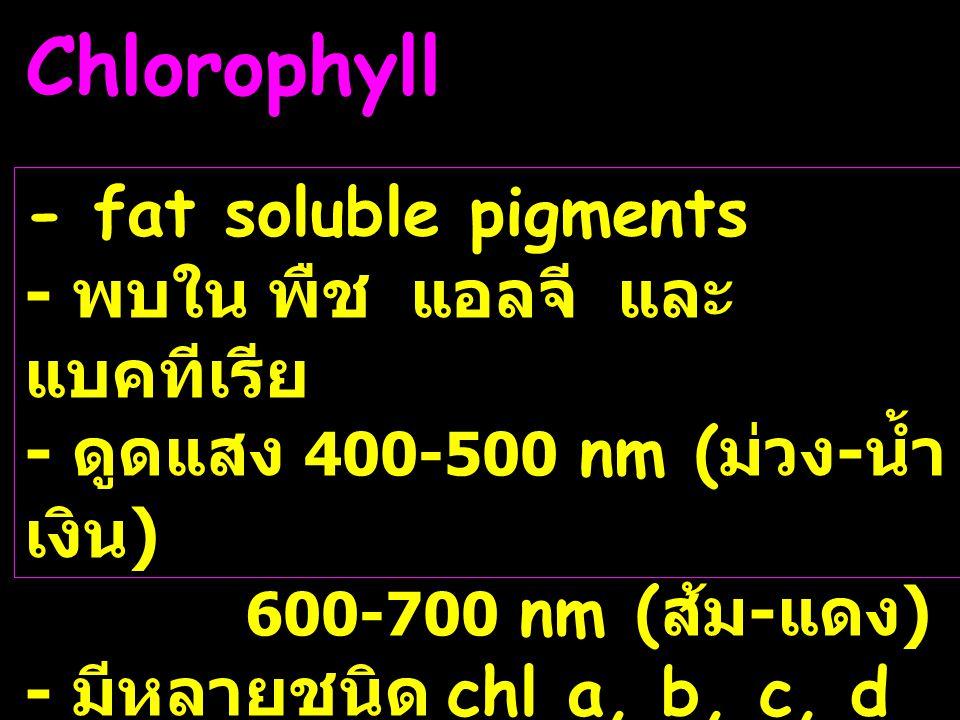 Chlorophyll - fat soluble pigments - พบใน พืช แอลจี และ แบคทีเรีย - ดูดแสง 400-500 nm ( ม่วง - น้ำ เงิน ) 600-700 nm ( ส้ม - แดง ) - มีหลายชนิด chl a,