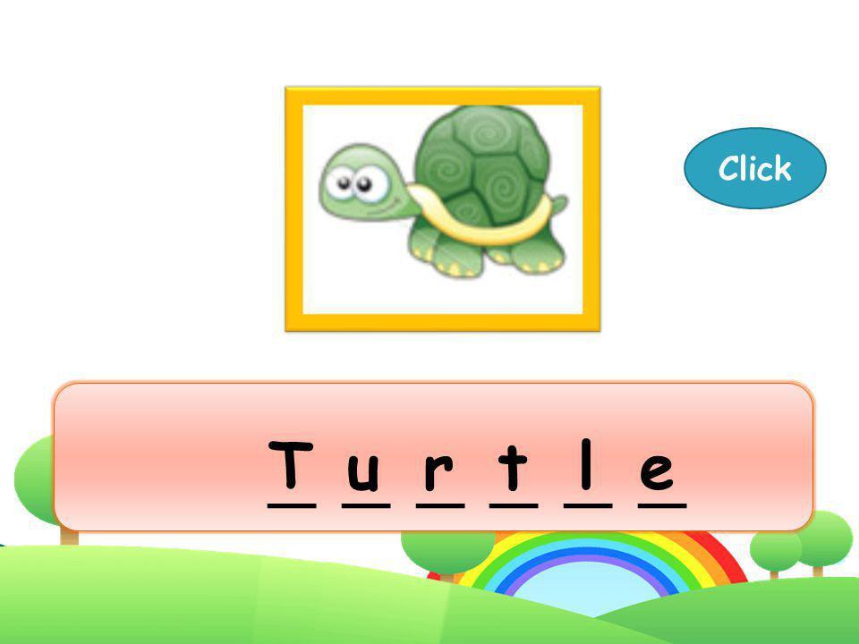 Turtle Next