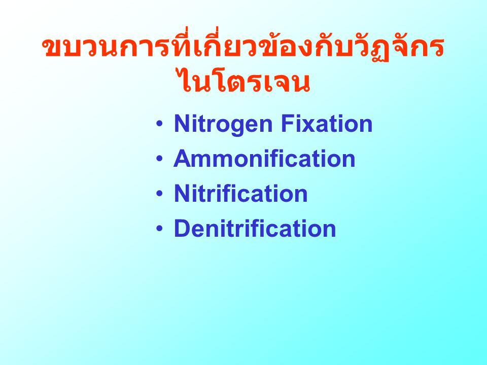 ขบวนการที่เกี่ยวข้องกับวัฏจักร ไนโตรเจน •Nitrogen Fixation •Ammonification •Nitrification •Denitrification