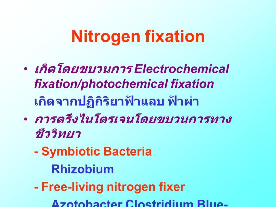 Nitrogen fixation • เกิดโดยขบวนการ Electrochemical fixation/photochemical fixation เกิดจากปฏิกิริยาฟ้าแลบ ฟ้าผ่า • การตรึงไนโตรเจนโดยขบวนการทาง ชีววิท