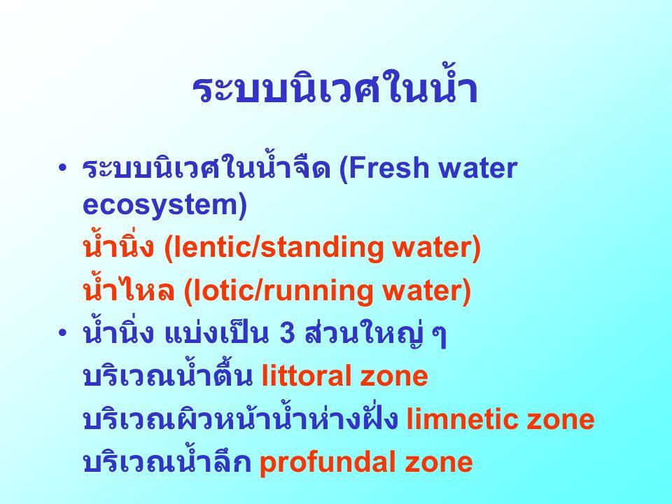 ระบบนิเวศในน้ำ • ระบบนิเวศในน้ำจืด (Fresh water ecosystem) น้ำนิ่ง (lentic/standing water) น้ำไหล (lotic/running water) • น้ำนิ่ง แบ่งเป็น 3 ส่วนใหญ่