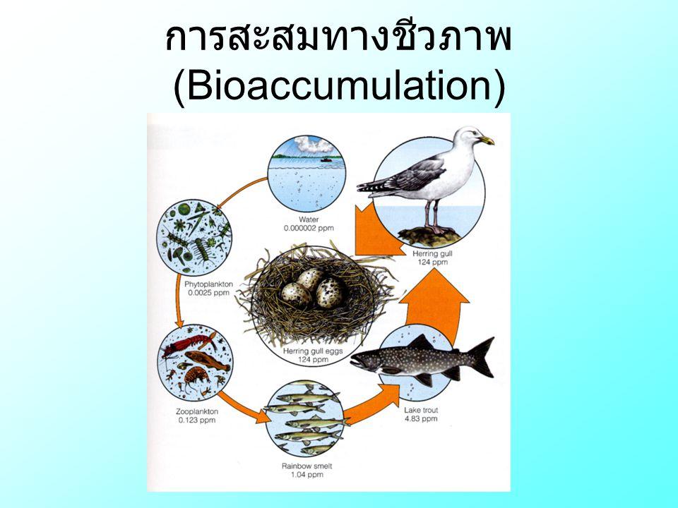 การสะสมทางชีวภาพ (Bioaccumulation)