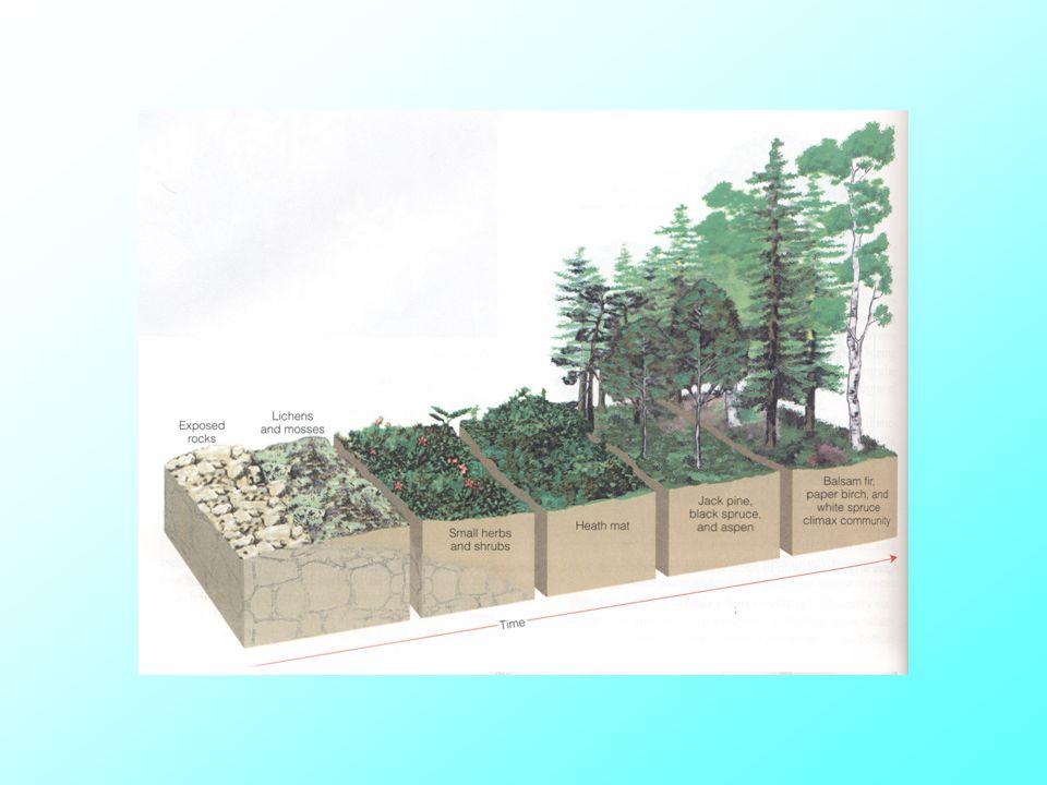 ผลกระทบสิ่งแวดล้อม • มลพิษทางน้ำ • มลพิษทางอากาศ • มลพิษของดิน