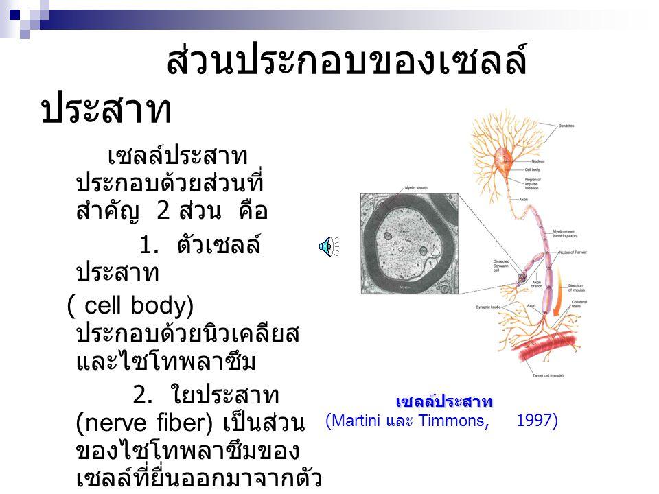 ส่วนประกอบของเซลล์ ประสาท เซลล์ประสาท ประกอบด้วยส่วนที่ สำคัญ 2 ส่วน คือ 1. ตัวเซลล์ ประสาท ( cell body) ประกอบด้วยนิวเคลียส และไซโทพลาซึม 2. ใยประสาท