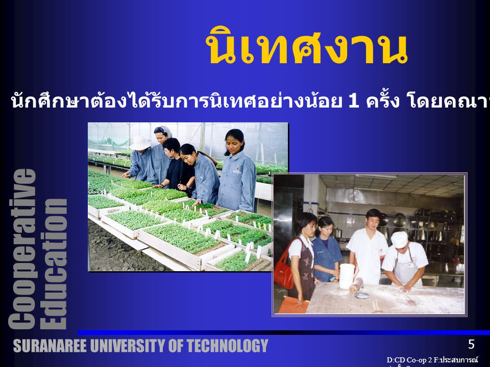 Cooperative Education กิจกรรมนักศึกษาหลังจากปฏิบัติงาน การนำเสนอของนักศึกษาสหกิจศึกษา ( ภาคโปสเตอร์ ) SURANAREE UNIVERSITY OF TECHNOLOGY D:CD Co-op 2 F: ประสบการณ์ ก่อตั้ง 2 4