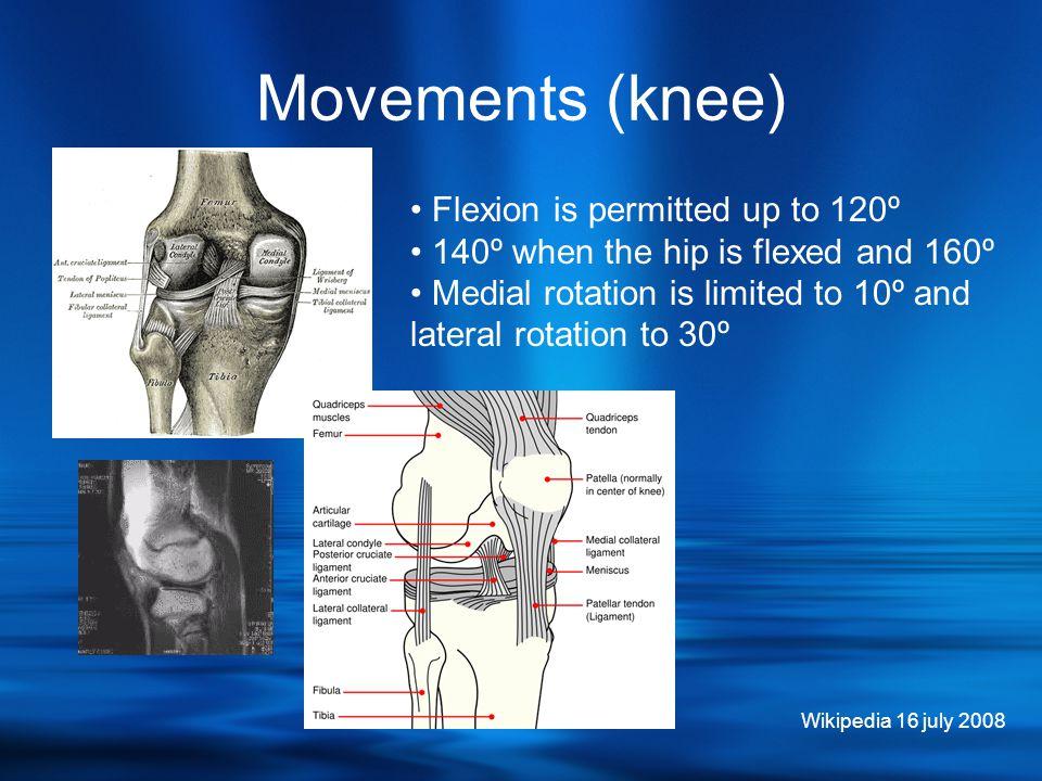 Movements (ankle) • Medial rotation is limited to 60º • Dorsiflexion 10º - 30º • Plantarflexion 20º - 50º