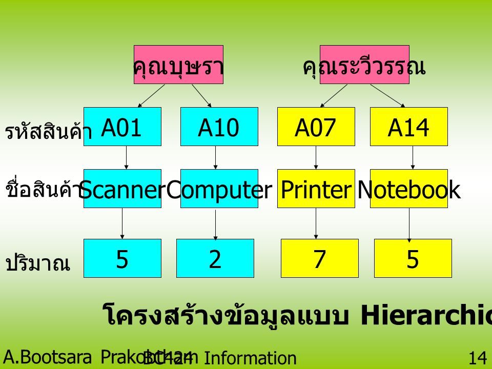 A.Bootsara Prakobtham BC424 Information Technology 13 Hierarchical Database Model