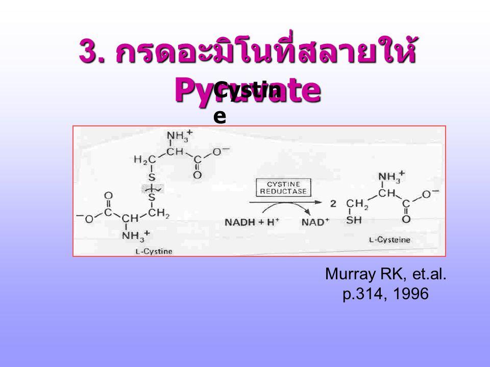 3. กรดอะมิโนที่สลายให้ Pyruvate http://arethusa.unh.edu/bchm752/pptht ml/mar7/Mar7/sld025.htm