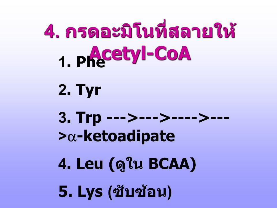3. กรดอะมิโนที่สลายให้ Pyruvate http://arethusa.unh.edu/bchm752/pptht ml/mar7/Mar7/sld025.htm Threonine aldolase