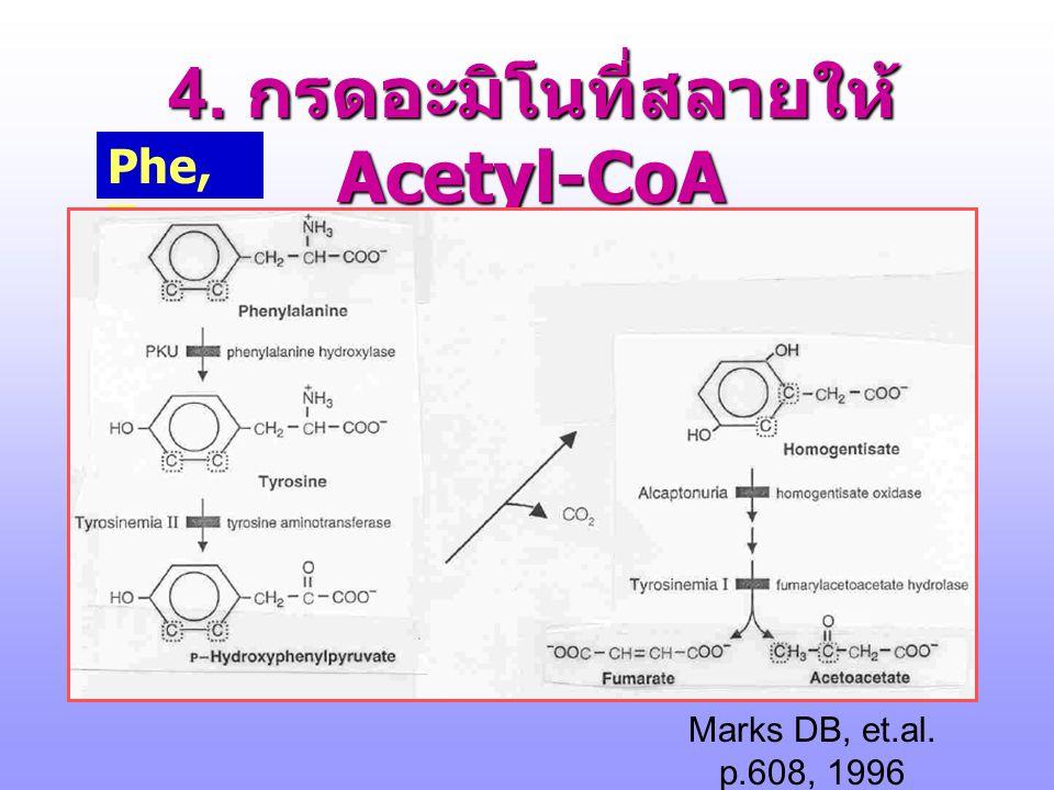 4. กรดอะมิโนที่สลายให้ Acetyl-CoA 1. Phe 2. Tyr 3. Trp --->--->---->--- >  -ketoadipate 4. Leu ( ดูใน BCAA) 5. Lys ( ซับซ้อน )