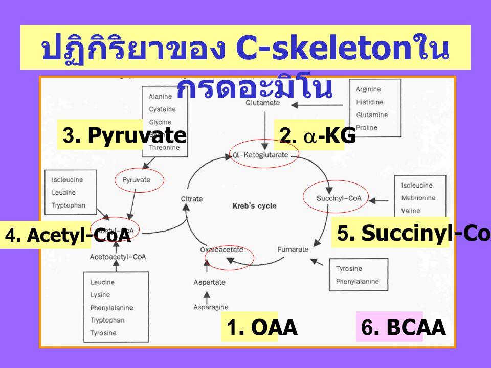 II. การสลายกรดอะมิโน 1. Disposal of Nitrogen 2. Degradation of C- skeleton
