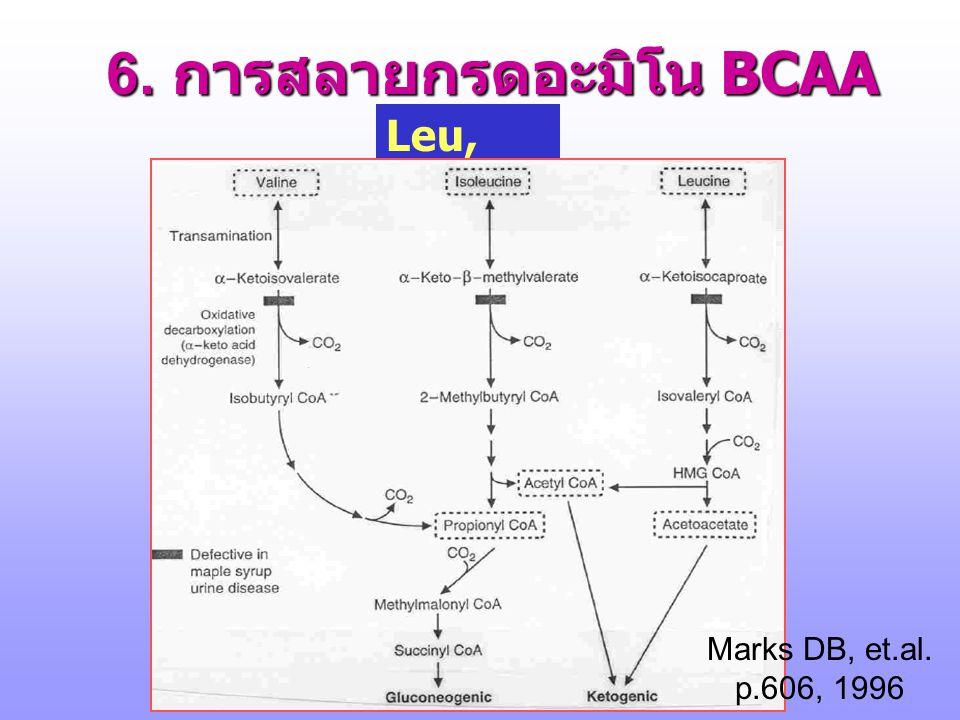 5. กรดอะมิโนที่สลายให้ Succinyl-CoA Met, Ile, Val