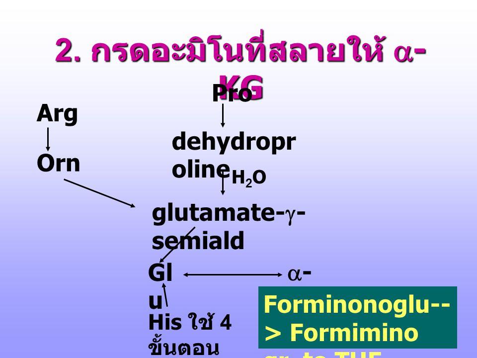 กรดอะมิโนที่สลายให้ Murray RK, et.al. p.311, 1996 2.  -KG 1. OAA