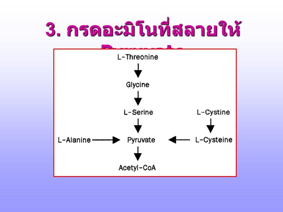 http://www.de ntistry.leeds.a c.uk/biochem/ MBWeb/mb2/ part1/23- aacarb.ppt