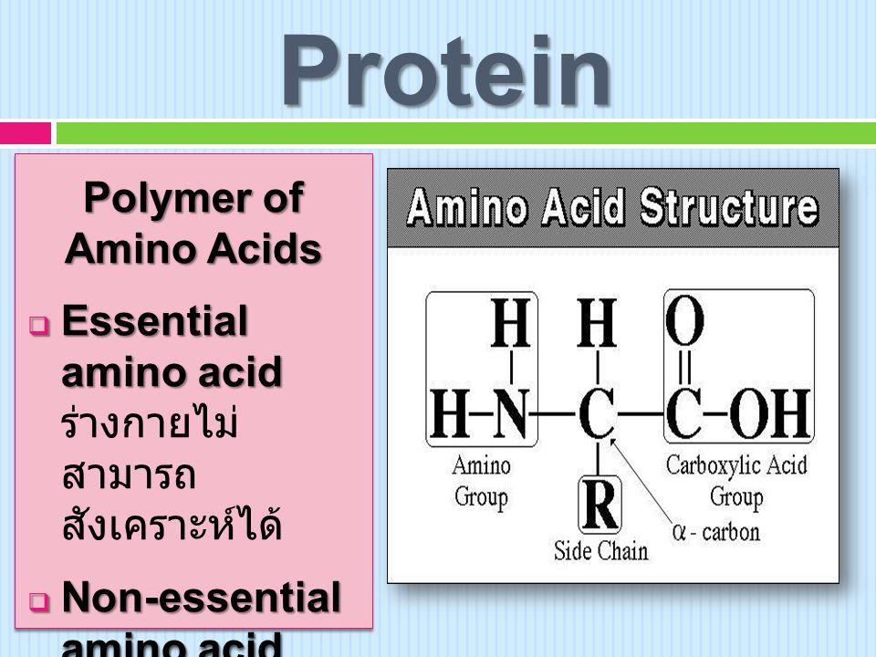 Protein Polymer of Amino Acids  Essential amino acid  Essential amino acid ร่างกายไม่ สามารถ สังเคราะห์ได้  Non-essential amino acid  Non-essential amino acid ร่างกายสามารถ สังเคราะห์ได้ Polymer of Amino Acids  Essential amino acid  Essential amino acid ร่างกายไม่ สามารถ สังเคราะห์ได้  Non-essential amino acid  Non-essential amino acid ร่างกายสามารถ สังเคราะห์ได้