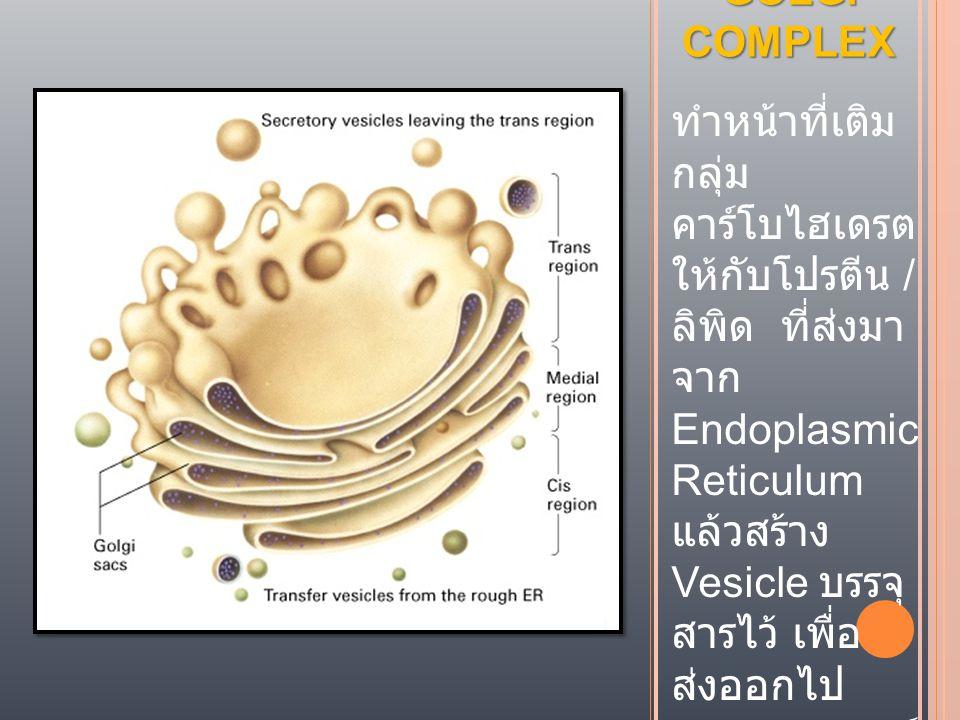 GOLGI COMPLEX ทำหน้าที่เติม กลุ่ม คาร์โบไฮเดรต ให้กับโปรตีน / ลิพิด ที่ส่งมา จาก Endoplasmic Reticulum แล้วสร้าง Vesicle บรรจุ สารไว้ เพื่อ ส่งออกไป ภ