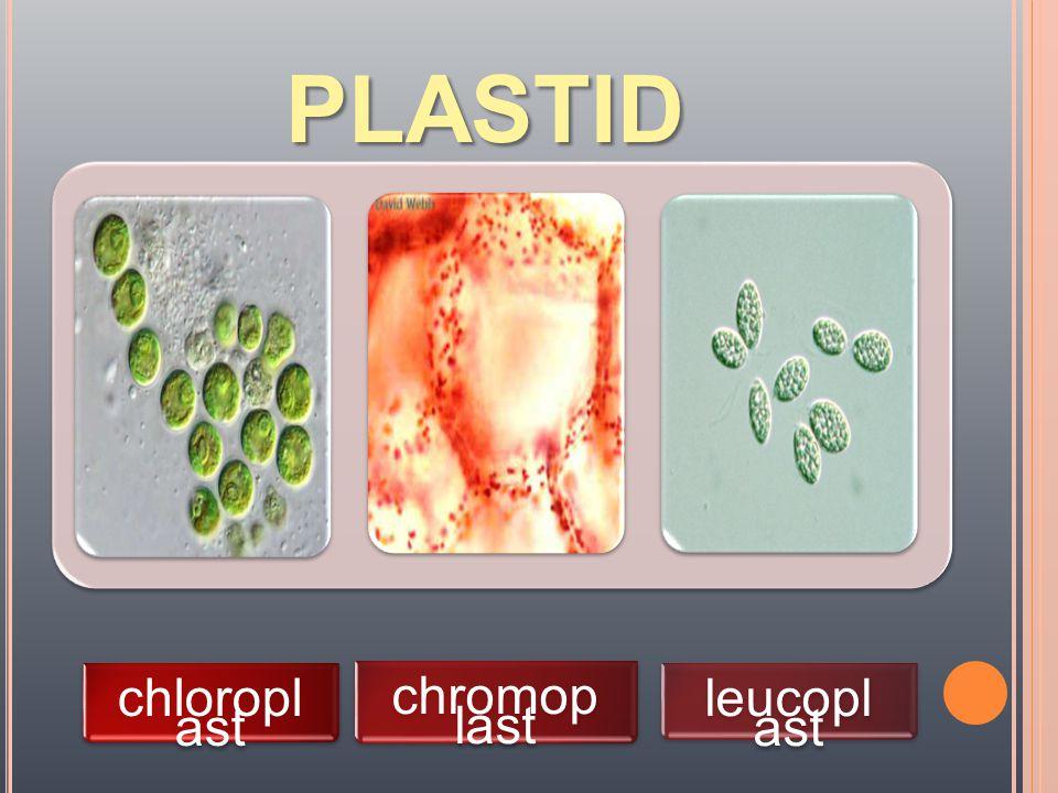 PLASTID chloropl ast chromopl ast leucopl ast