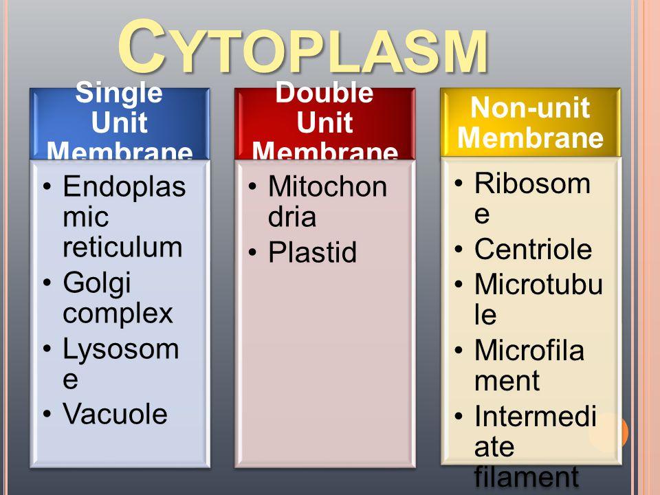 MICROFILAMENT  การ เคลื่อนที่ ของเซลล์  ค้ำจุน รูปร่างเซลล์