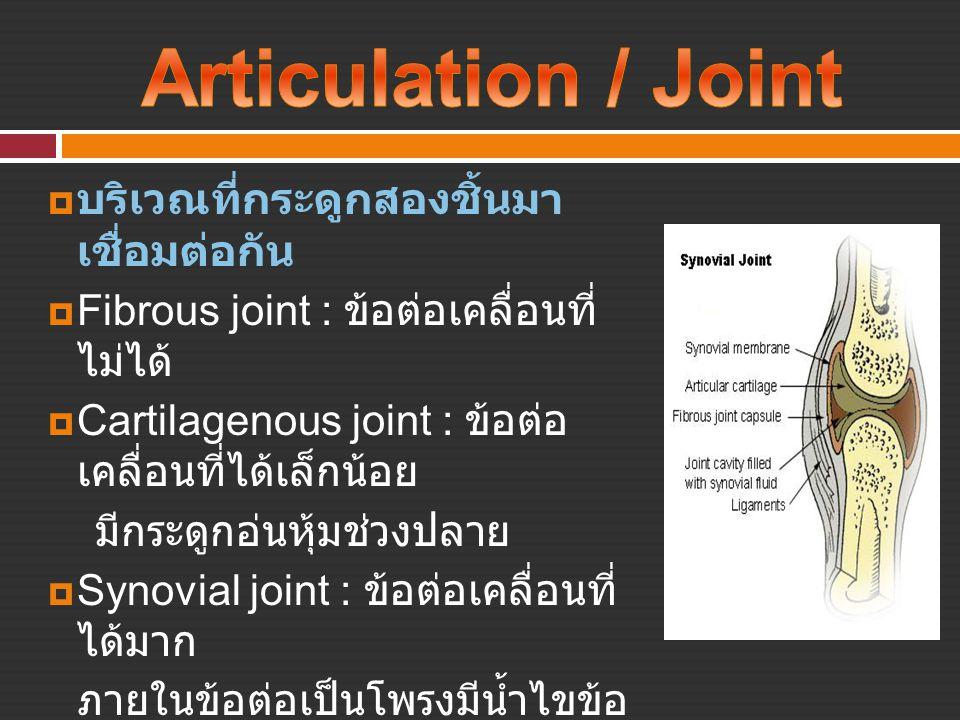  บริเวณที่กระดูกสองชิ้นมา เชื่อมต่อกัน  Fibrous joint : ข้อต่อเคลื่อนที่ ไม่ได้  Cartilagenous joint : ข้อต่อ เคลื่อนที่ได้เล็กน้อย มีกระดูกอ่นหุ้ม