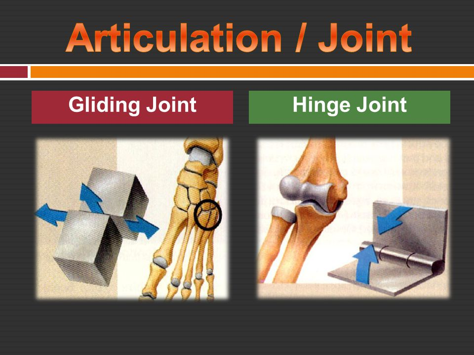 Gliding JointHinge Joint