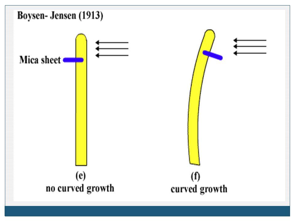 Ethyle ne เร่งการ สุกของ ผลไม้ กระตุ้นการ หลุดร่วง ของใบ กระตุ้นการ เกิดดอกเพศ เมียในพืช ตระกูลแตง กระตุ้น การเกิด ราก ทำให้สี ดอกไม้ จางลง กระตุ้น การเกิด ยางใน ต้น ยางพาร า