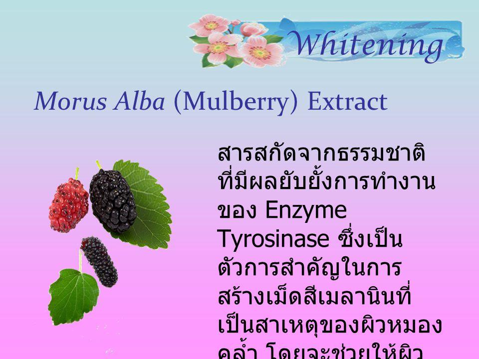 Morus Alba (Mulberry) Extract สารสกัดจากธรรมชาติ ที่มีผลยับยั้งการทำงาน ของ Enzyme Tyrosinase ซึ่งเป็น ตัวการสำคัญในการ สร้างเม็ดสีเมลานินที่ เป็นสาเห