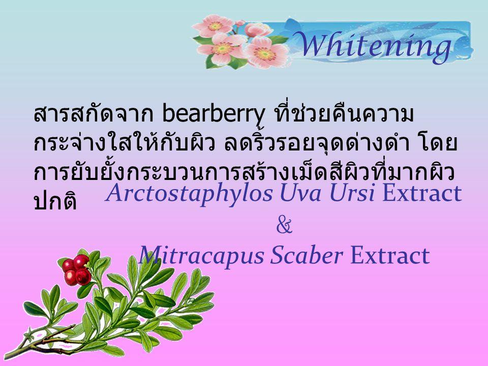 Arctostaphylos Uva Ursi Extract & Mitracapus Scaber Extract สารสกัดจาก bearberry ที่ช่วยคืนความ กระจ่างใสให้กับผิว ลดริ้วรอยจุดด่างดำ โดย การยับยั้งกร