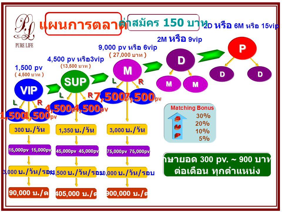 1,500 pv MM L L R R L L R R L L R RVIP 4,500 pv SUP M D DD P 15,000pv 15,000pv 3,000 บ./ วัน / รอบ 13,500 บ./ วัน / รอบ 30,000 บ./ วัน / รอบ Matching Bonus 30% 20% 10% 5% 1,500 pv ( 4,500 บาท ) 4,500 pv หรือ 3vip (13,500 บาท ) 9,000 pv หรือ 6vip ( 27,000 บาท ) 2M หรือ 9vip 2D หรือ 6M หรือ 15vip 90,000 บ./ ด 405,000 บ./ ด 900,000 บ./ ด แผนการตลาด รักษายอด 300 pv.