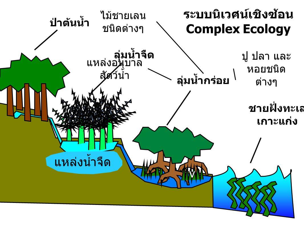 ระบบนิเวศน์เชิงซ้อน Complex Ecology v ป่าต้นน้ำ ลุ่มน้ำจืด ลุ่มน้ำกร่อย ชายฝั่งทะเล เกาะแก่ง แหล่งน้ำจืด ไม้ชายเลน ชนิดต่างๆ แหล่งอนุบาล สัตว์น้ำ ปู ป